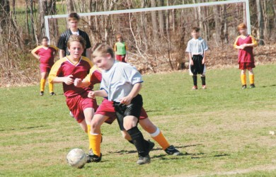 orchard park soccer camps